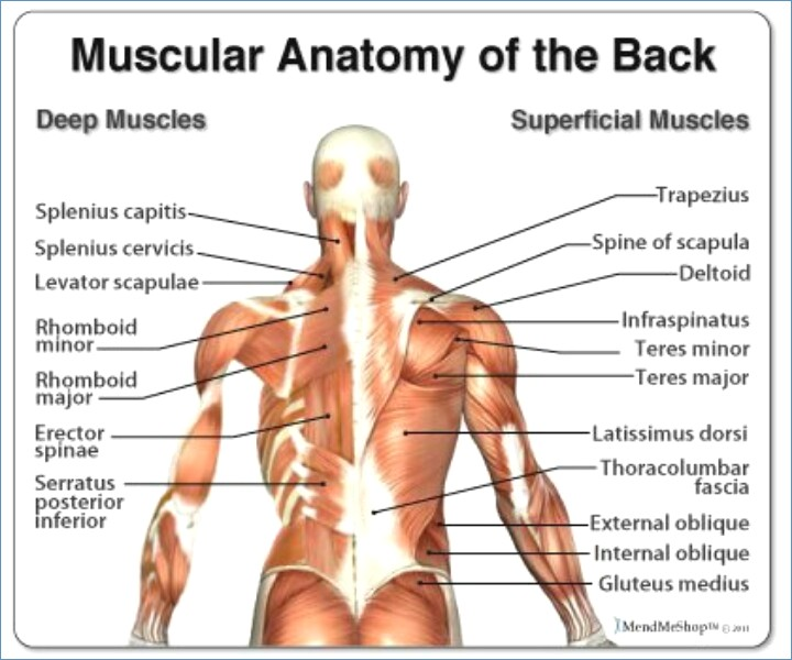 intercostal muscle strain